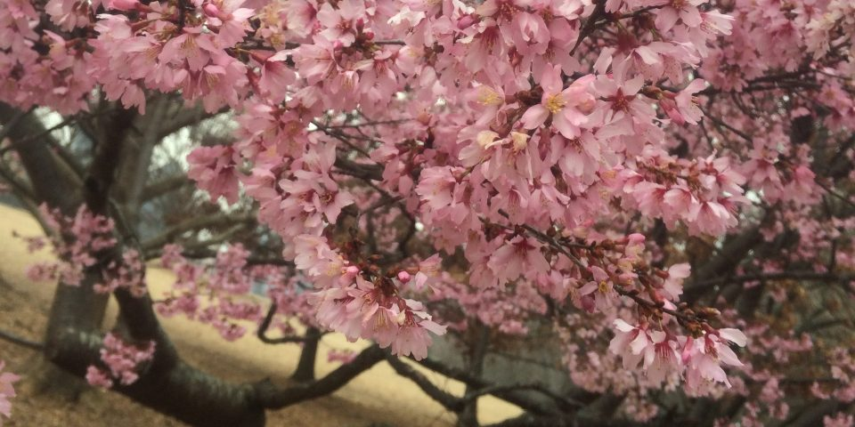 7 Gratitudes: PubSubs, Thunderstorms, Grace