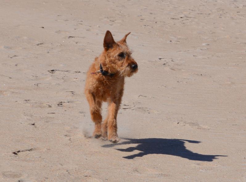Conan running in the sand