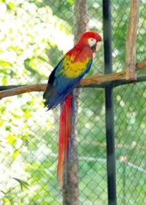 Fabulously colored Macaw