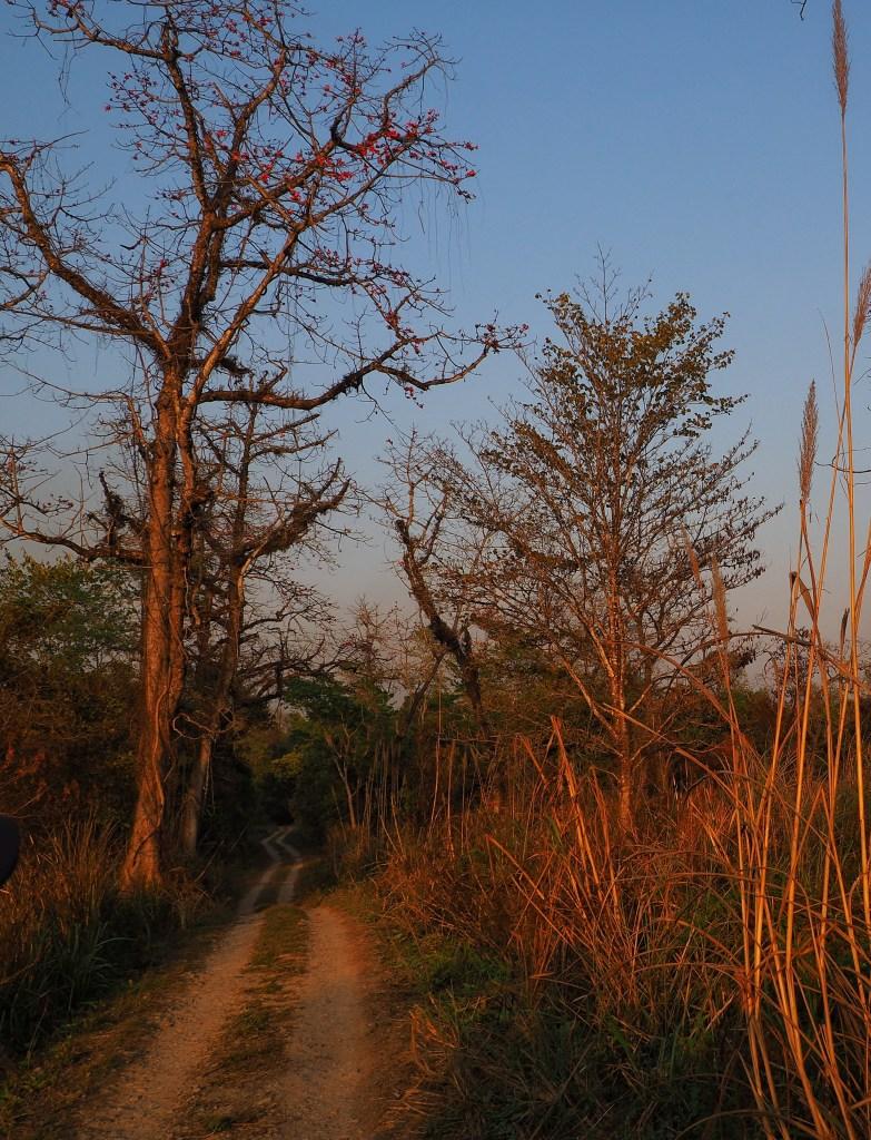 nepal, chitwan national park, sauraha, asia, animals, into the wild, jeep safari, jungle, nature, tiger conservation