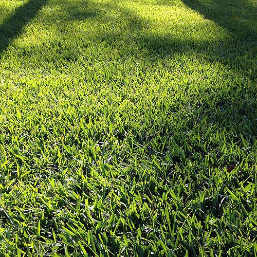 grass_sq_500