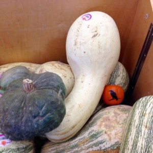 Great Gourd! [15 Words or Less Poems]
