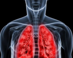 Il Polmone e il respiro