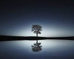 meditazione rene