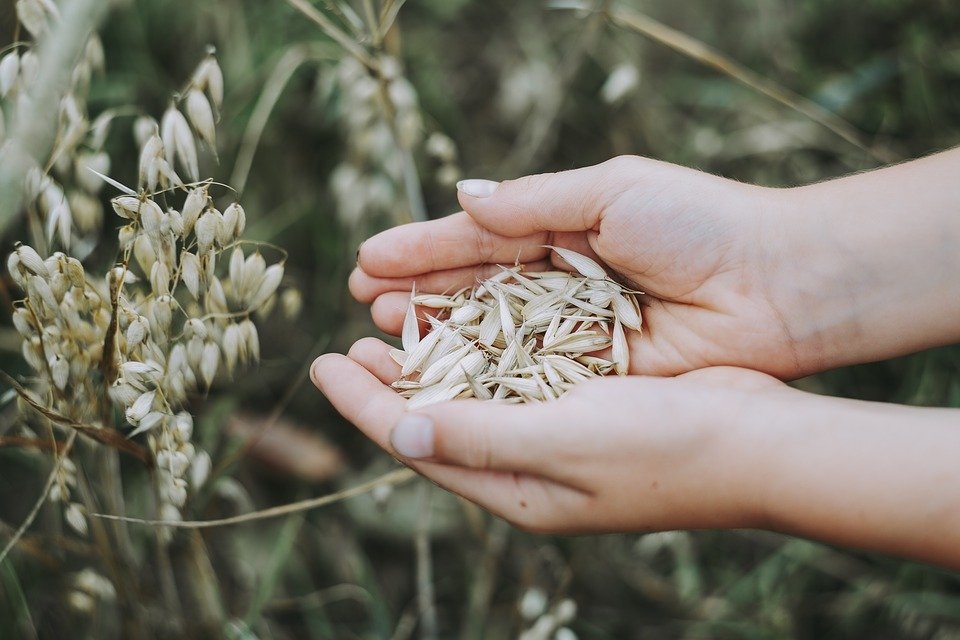 cereali in medicina cinese