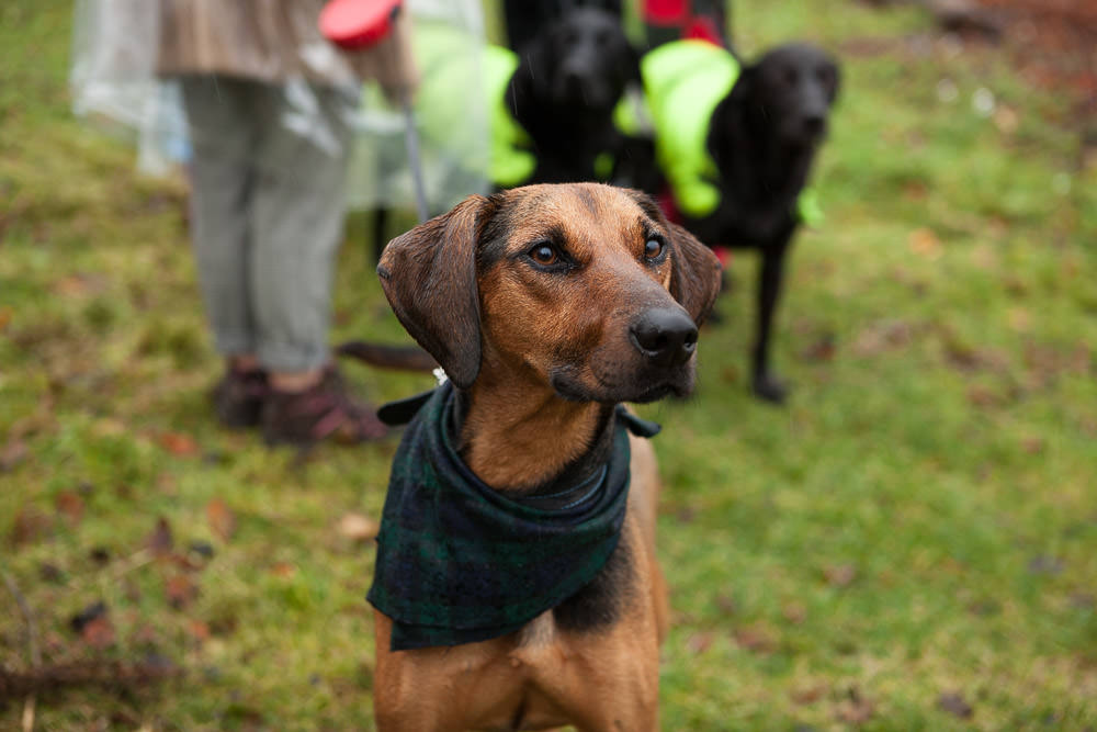 dog wears tartan bandana at Isle of Skye Wedding