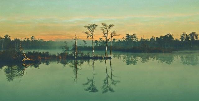 swamp-689355_1280