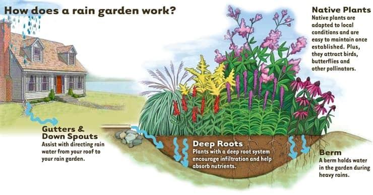 Design Your Own Rain Garden