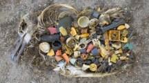 Toter Seevogel mit Plastik im Magen (Quelle: pravdatvcom)