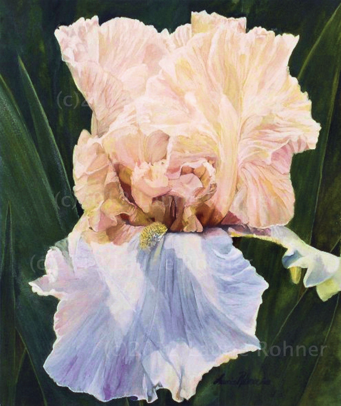 original watercolor painting Iris garden flower