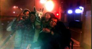 Ivres, ils volent un lama et prennent le tramway avec lui