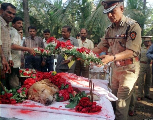 Les funérailles majestueuses de Zanjeer, le chien qui a sauvé des milliers de vies durant les explosions de 1993 à Mumbai, en Inde
