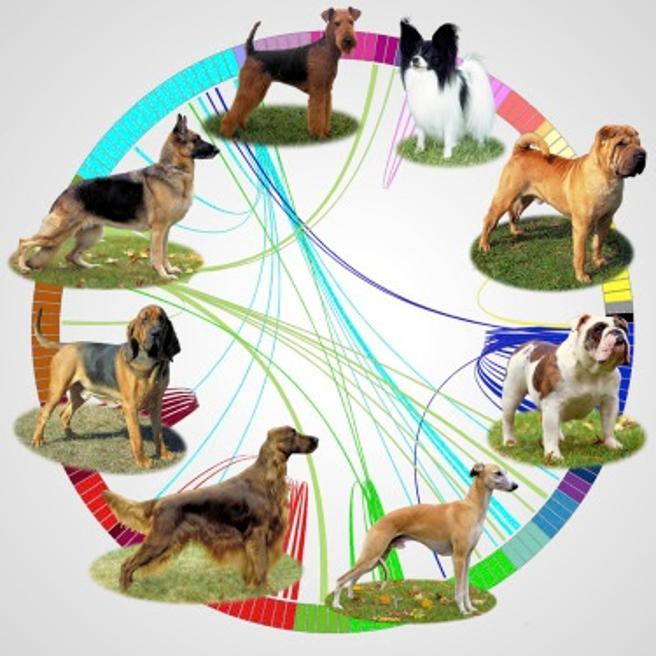 Relaciones de genoma y fenotipo en algunas de las razas de perros más conocidas