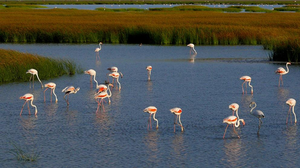 A Doñana le roban el agua