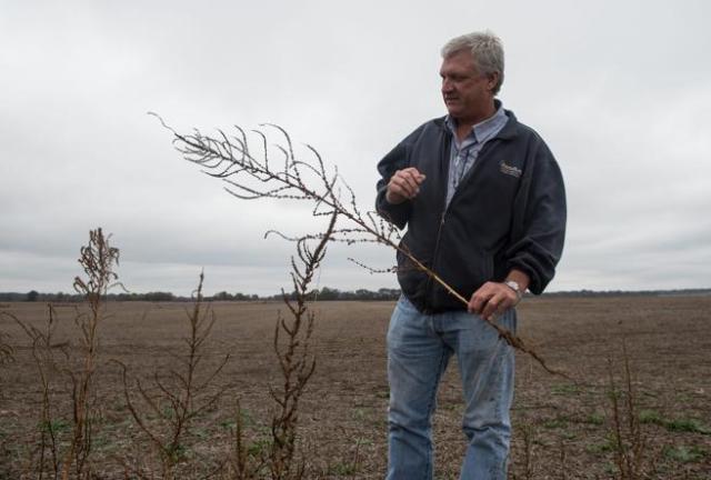 Perry Galloway, un agricultor de Gregory, en Arkansas, en uno de sus campos supuestamente afectados por el dicamba