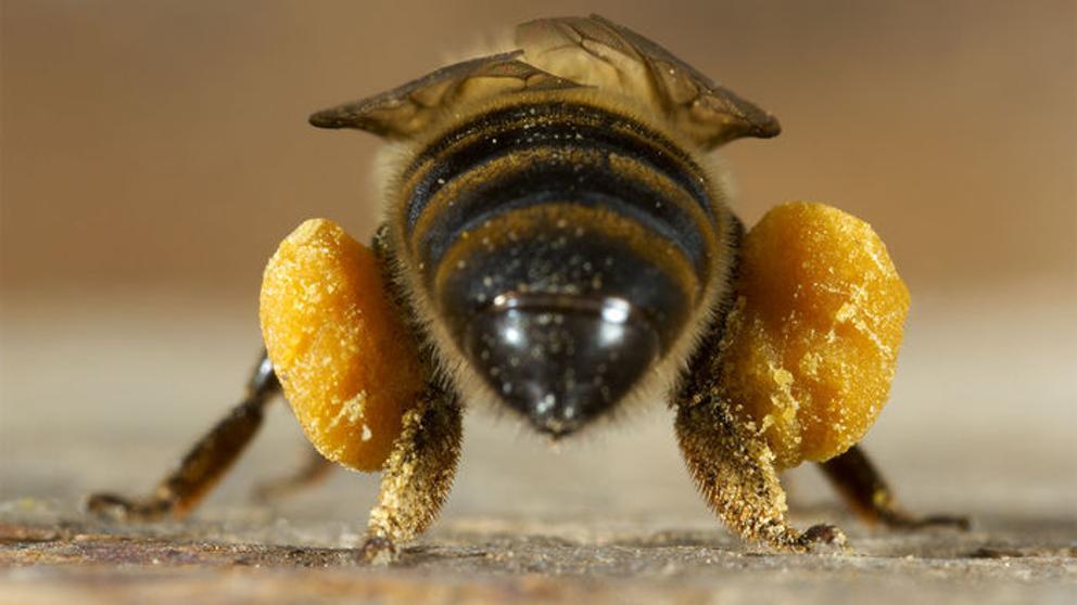 Image result for abejas
