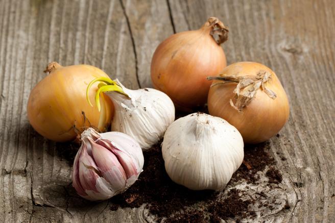 Cebollas y ajos pueden potenciar el mal aliento
