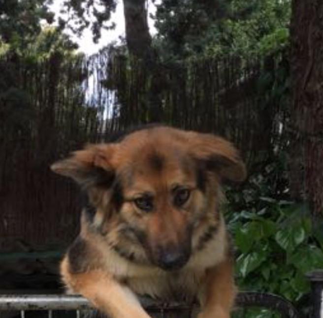 Uno de los perros de Sandra. No tiene aspecto de ser muy furioso.