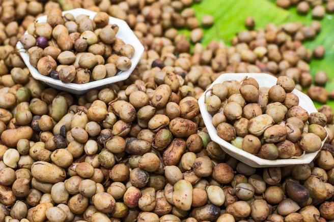 Las nueces bambara es un cultivo de Africa Subsahariana que resiste altas temperaturas y crece en suelos pobres
