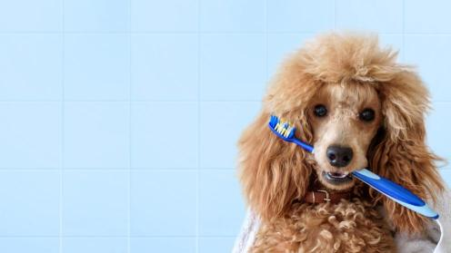Mi mascota esperando que le laven sus dientes