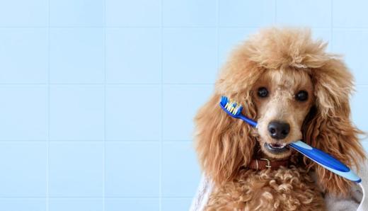 ¿Por qué debes cuidar la boca de tu perro?
