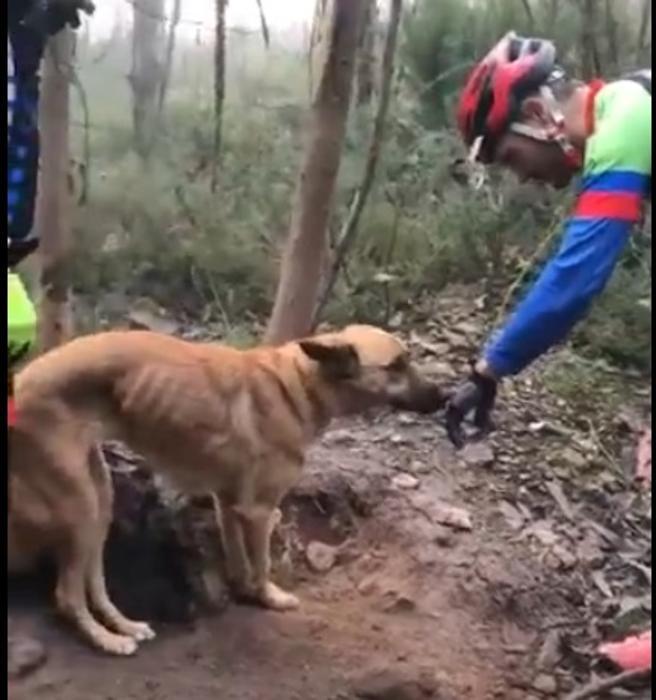 El perro abandonado mostraba señales evidentes de no haber recibido alimentos durante varios días