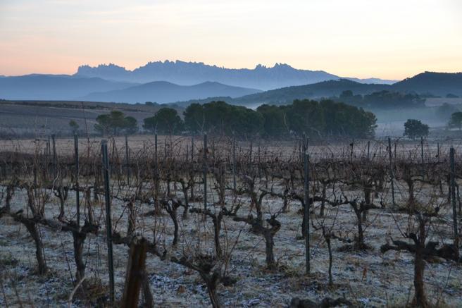 Finca de Torres en el Penendès con vitivinicultura ecológica