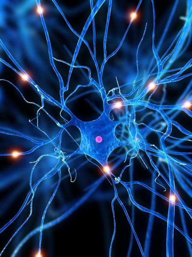 El nervio vago aumenta la conectividad neuronal y está involucrado en la transmisión de información desde el microbioma intestinal al cerebro neuronal
