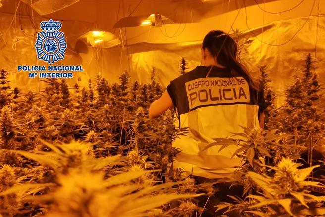 Una agente inspecciona una plantación desmantelada por la Policía Nacional el pasado septiembre