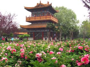 Garden of Peonies in Luoyang