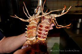 Grecia, Skyros: un ristoratore ci spiega la differenza fra maschio e femmina di aragosta.