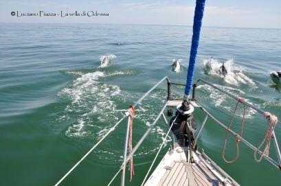 Delfini nel Mar Nero.