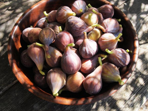 Fresh Figs from my Tree