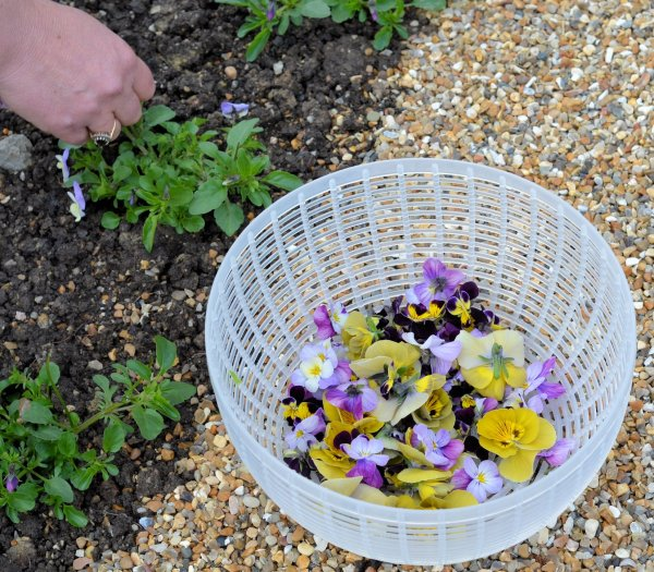 Rhubarb Cordial, Tulips, Edible Flowers and a Day at Perch Hill with Sarah Raven