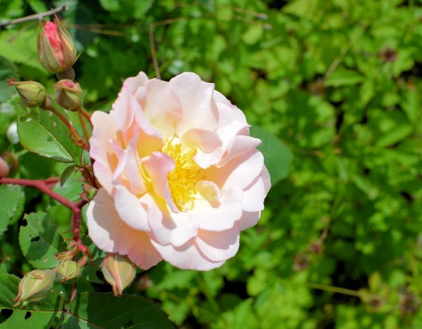 Giveaway: Win £75 Sainsbury's Vouchers! How DOES your Garden Grow?