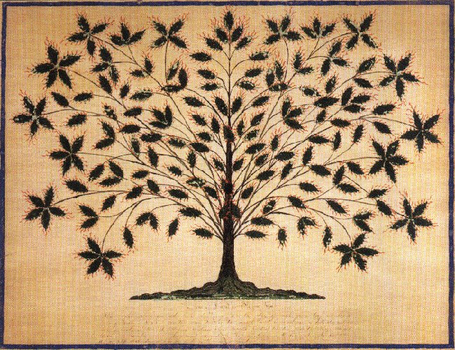 Hannah Cohoon - The Tree of Life