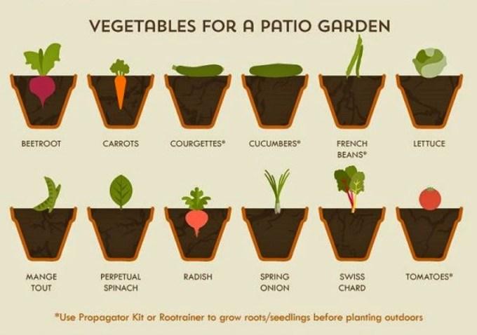 Patio Planting