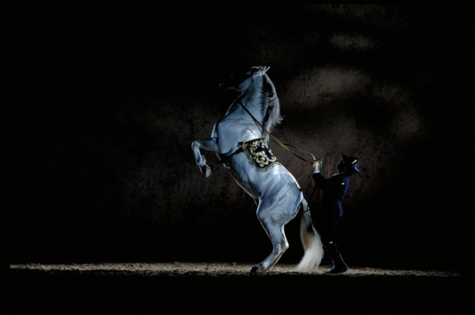 The Dancing Andalusian Horses