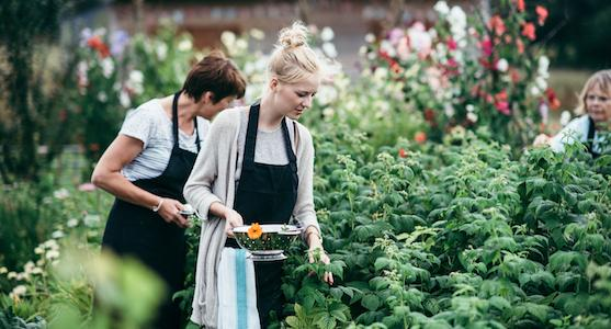 River Cottage Veg Cookery Course