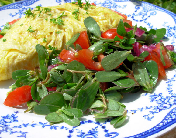 Wild Purslane Salad With Olive Oil and Lemon Dressing
