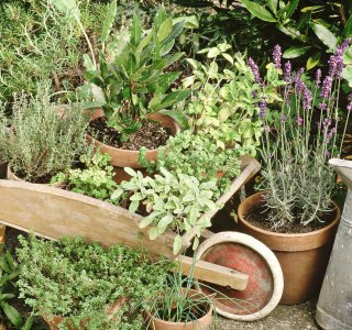 February Herbs on Saturday Challenge: Win a copy of the Self-sufficiency Foraging book