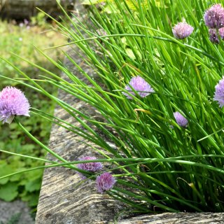 July Cooking with Herbs Challenge (Herbs on Saturday) Win a Foraging & Wild Food Book