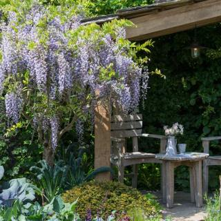 Wellness & Flowers at RHS Chelsea Flower Show