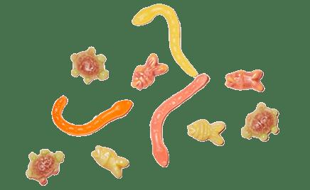 animal-jellies