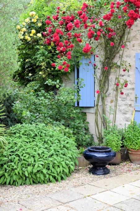 Roses on back terrace