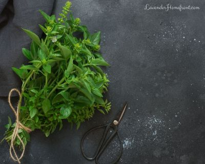 when and how to harvest oregano