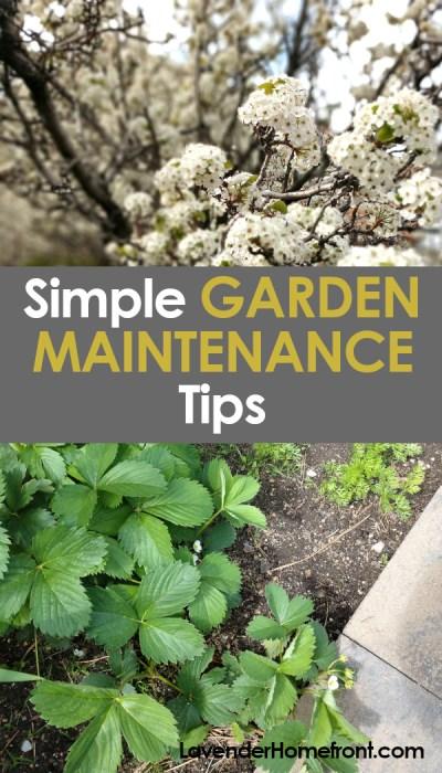 garden maintenance tips pinnable image