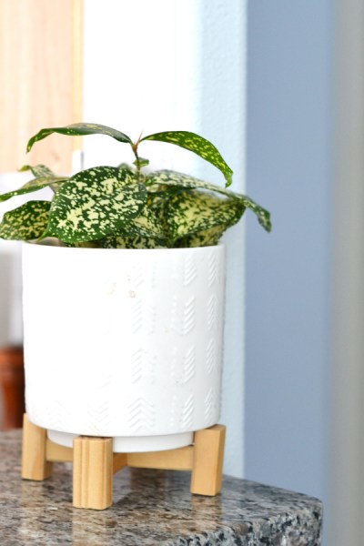 planted pot for healthier home