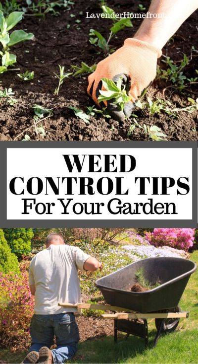 weed control tips for your garden pinnable image