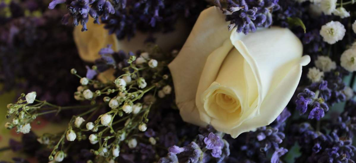 White rose with lavender.